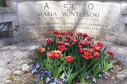 The Maria Montessori tulips in bloom at her gravesite